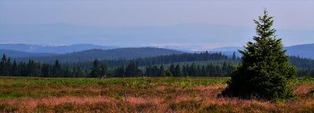 szeroki kąta widok krajobraz z małym świerkowym drzewem w przedpolu Zdjęcia Stock
