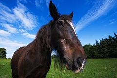 Szeroki kąta zakończenie koń zdjęcie stock