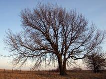 szeroki kąta drzewo Zdjęcia Stock