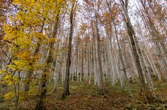 Szeroki krajobraz z srebnym lasem widzieć od bellow obrazy stock