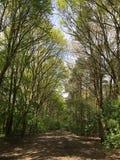 Szeroki lasu ślad Zdjęcie Royalty Free