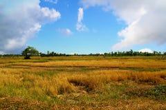 Szeroki pole uprawne w niebieskim niebie Fotografia Stock