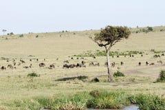 Szeroki rozciągnięty obszar trawiasty z zwierzęciem Fotografia Royalty Free