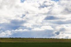 Szeroki strzał barani pasanie w zieleni polu w Caledon, Zachodni przylądek, Południowa Afryka obrazy royalty free