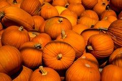 Szeroki tłum banie dla Halloween zakończenia w górę kabaczka Obraz Royalty Free