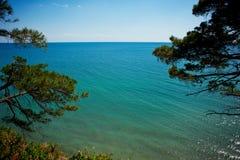 Szeroki turkus, iskrzasty morze, obramiający sosnami Obraz Royalty Free