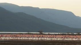 Szeroki widok flamingi na brzeg jeziorny bogoria, Kenya zbiory
