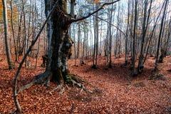 Szeroki widok jesieni drzewa obraz stock