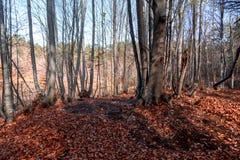 Szeroki widok jesieni drzewa obrazy royalty free