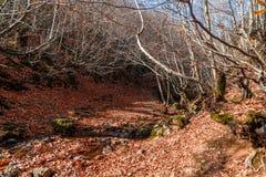 Szeroki widok jesieni drzewa fotografia royalty free