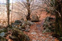 Szeroki widok jesieni drzewa fotografia stock