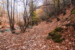 Szeroki widok jesieni drzewa obraz royalty free