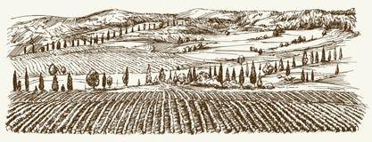 Szeroki widok winnica Winnica krajobrazowa panorama ilustracja wektor