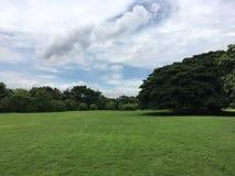 Szeroki zieleni pole, drzewo i Obraz Royalty Free