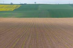 Szerokiej fasoli pola ampuły widok Obrazy Royalty Free