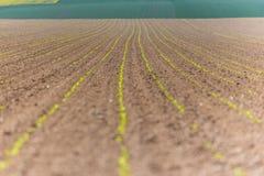 Szerokiej fasoli pola zakończenia widok Obraz Stock