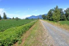 Szeroko Otwarty Wiejski krajobraz i droga zdjęcie royalty free