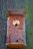 Szerszenia ` gniazdeczko w ptasim pudełku obraz stock