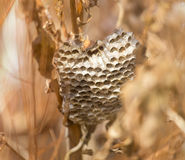 Szerszenia ` s gniazdeczko w trawie Fotografia Stock