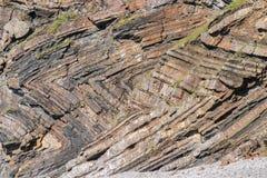Szewronu falcowanie w geological warstwach przy Millook przystanią blisko Crackington przystani w Cornwall Obraz Stock
