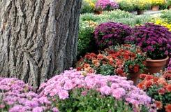 szkółki roślinne Obraz Royalty Free
