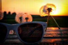 Szkła kłama na drewnianych dandelions Fotografia Stock