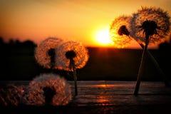 Szkła kłama na drewnianych dandelions Zdjęcie Stock