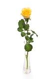 szkła kolor żółty różany wazowy Fotografia Stock
