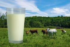 Szkło mleko i krowy Zdjęcie Royalty Free