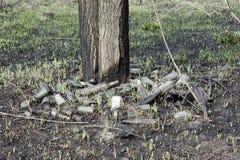Szk?a i klingerytu butelki pod pal?cym drzewem, ?mieci, zanieczyszczenie ?rodowiska obraz stock
