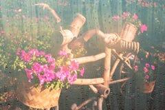 Szkło z kwiatu garnkiem rocznik Zdjęcie Royalty Free