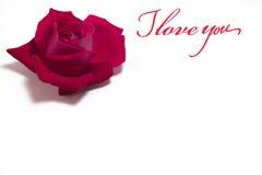 Szkarłat róża pączka Zdjęcia Royalty Free