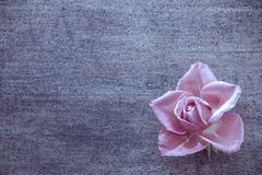 Szkarłat róży na starego krakingowego drewnianego tła selekcyjnej ostrości, bezpłatna przestrzeń dla teksta Zdjęcia Stock