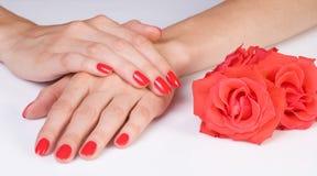 Szkarłatny manicure i róże Obrazy Stock
