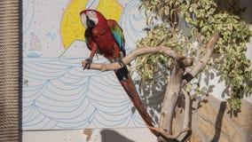 Szkarłatna ara na drewnie Zdjęcie Stock