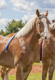 Szkiców konie Zdjęcie Stock