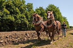 Szkiców konie ciągnie pług Obraz Royalty Free