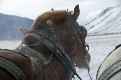 Szkiców konie na łosia schronieniu Zdjęcie Stock