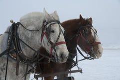 Szkiców konie na łosia schronieniu Obraz Royalty Free