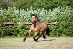 Szkicu konia ogiera prędkości cwałowanie w wieczór stadniny gospodarstwie rolnym Obraz Royalty Free