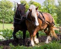 szkiców konie Zdjęcia Royalty Free