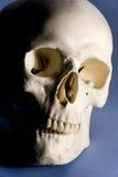 szkielet Obraz Stock