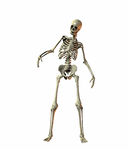 szkielet Obrazy Stock