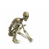 szkielet Fotografia Royalty Free
