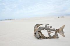 szkielet pustynny ryb Obraz Royalty Free
