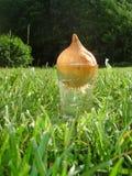 szklana trawy cebuli woda Zdjęcie Stock