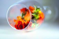 Szklana waza wypełniająca z czerwieni róży płatkami pojęcie aromatherapy Obraz Royalty Free