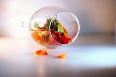 Szklana waza wypełniająca z czerwieni róży płatkami pojęcie aromatherapy Obrazy Royalty Free