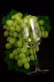 szklani winogrona Obrazy Stock