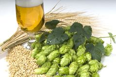 szklankę piwa Obraz Royalty Free